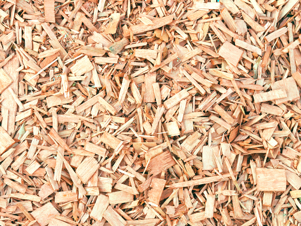 Bark wood chips background. Natural color pieces of wood splinters, backcloth